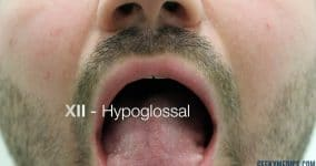 Hypoglossal - Tongue in mouth
