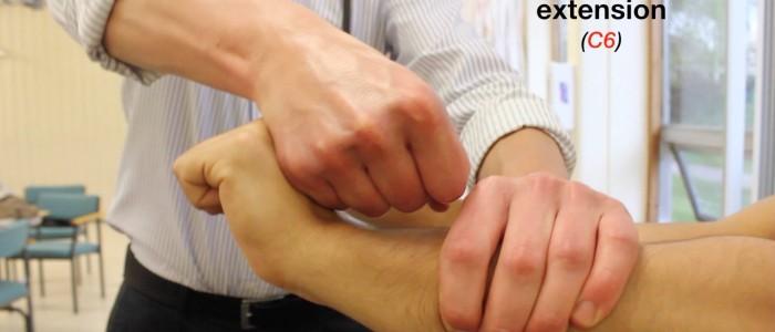 Wrist extension (C6)