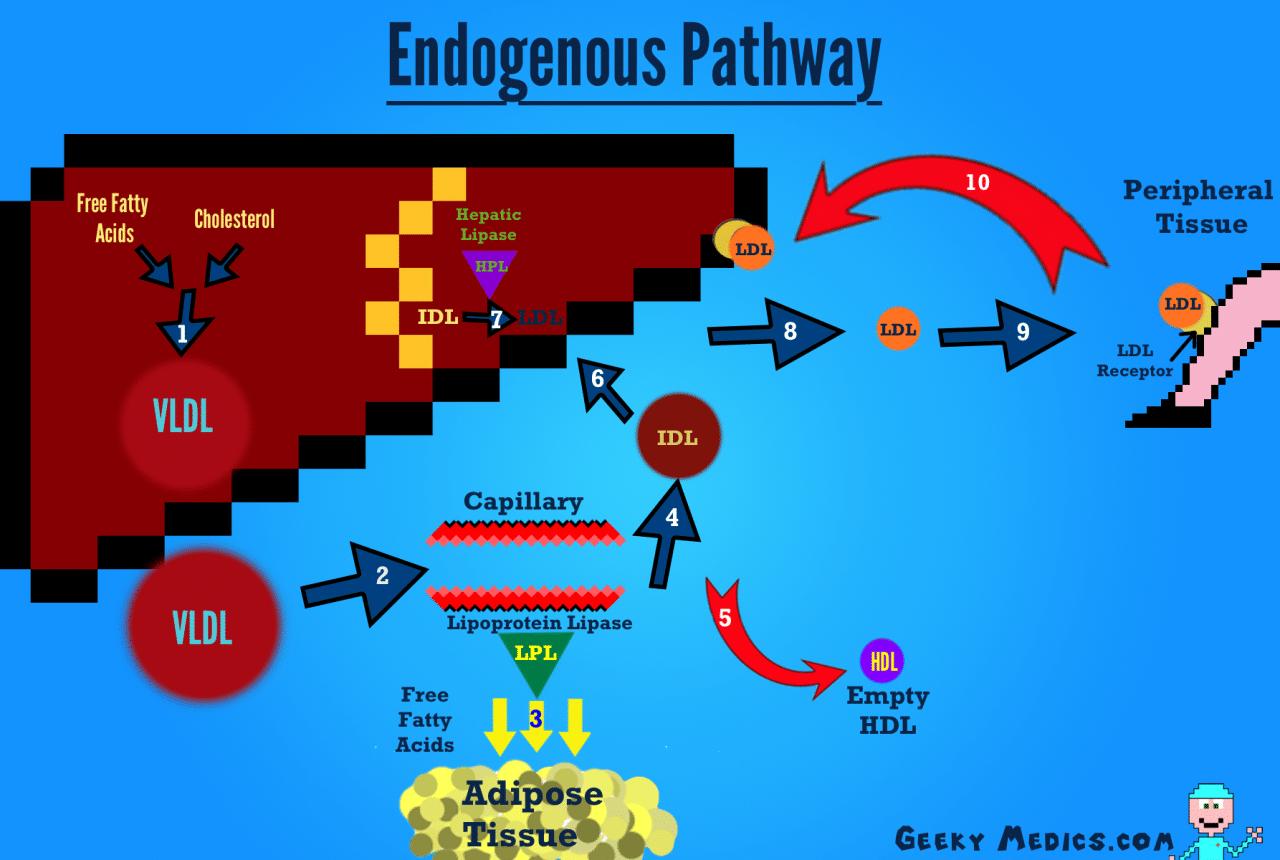 Endogenous cholesterol metabolism pathway