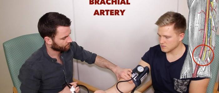 Palpate brachial artery