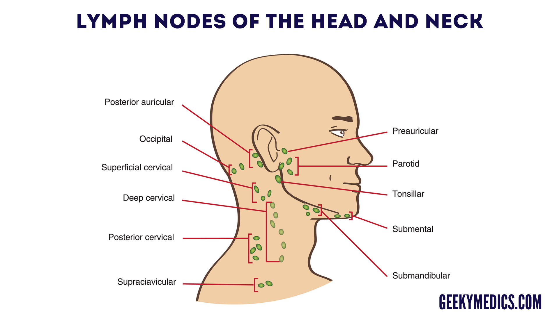 Neck Lump Examination - OSCE Guide | Geeky Medics