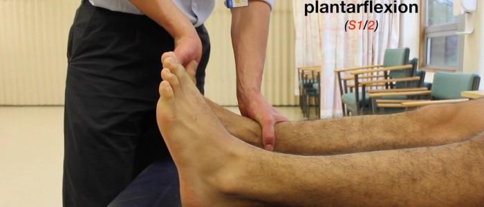 Ankle plantarflexion