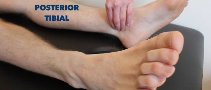 Posterior tibial pulse