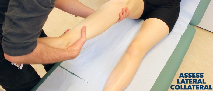 Medial Collateral Ligaments of the Knee Joint