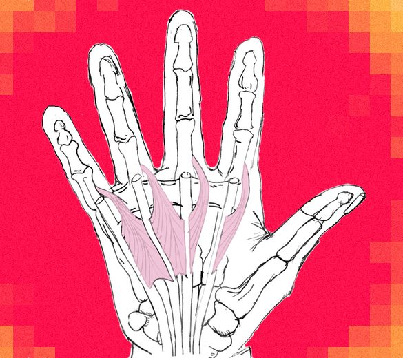 Hand Anatomy post pic