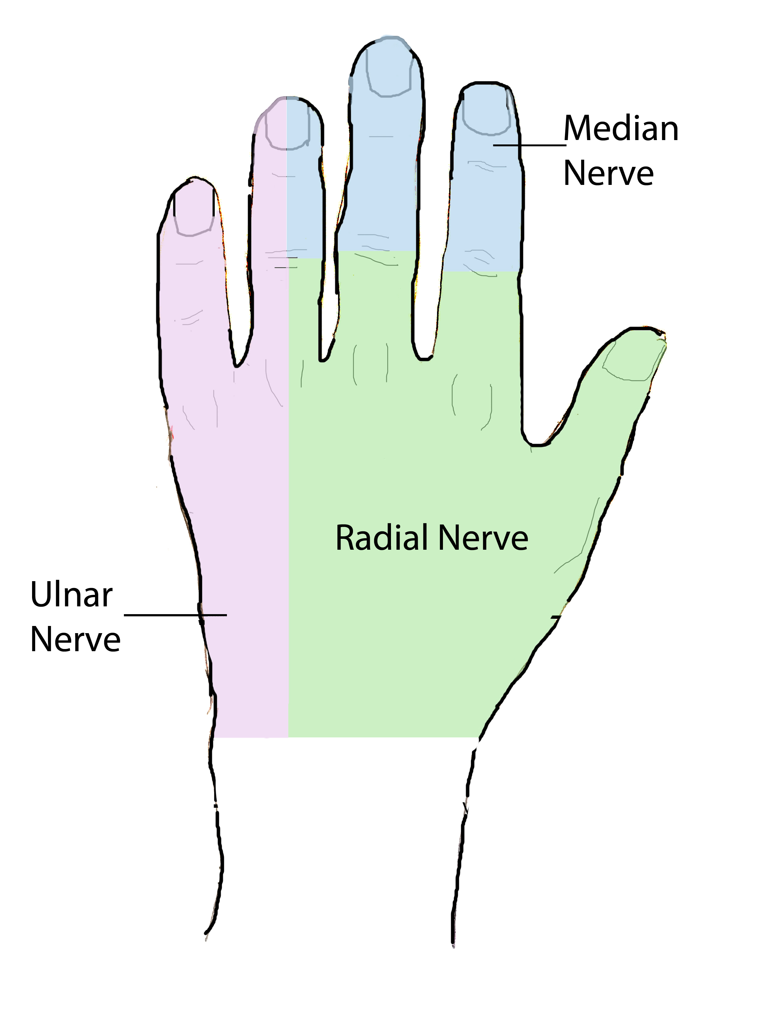 Hand Anatomy Overview | Bones, Blood Supply, Muscles | Geeky Medics