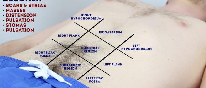 Inspect the abdomen