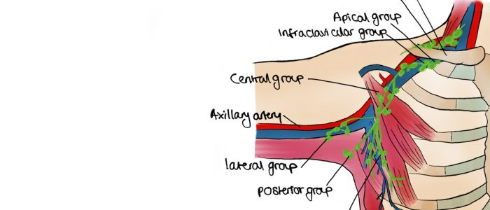 Diagram of axillary lymph node groups