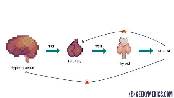 Thyroid hormonal axis diagram