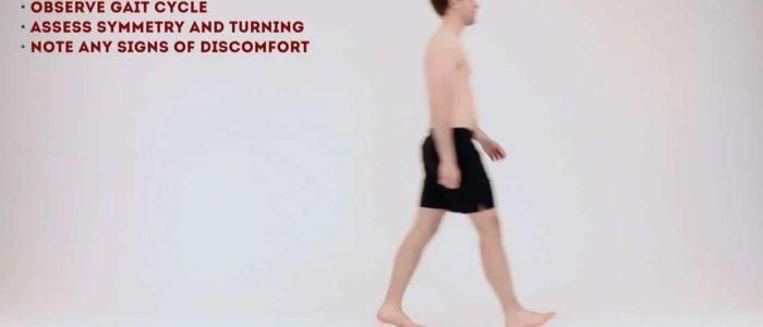 Gait (walking cycle)