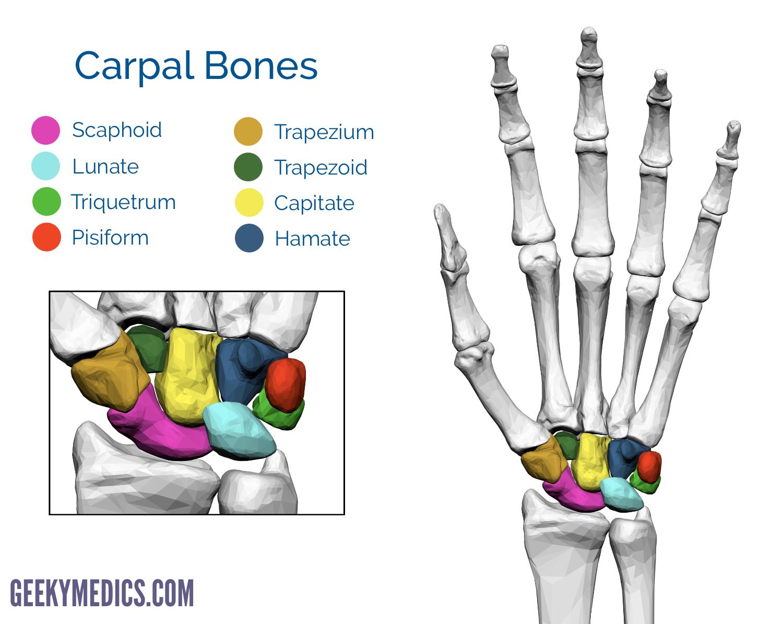 Bones Of The Hand Carpal Bones Metacarpal Bones Geeky Medics