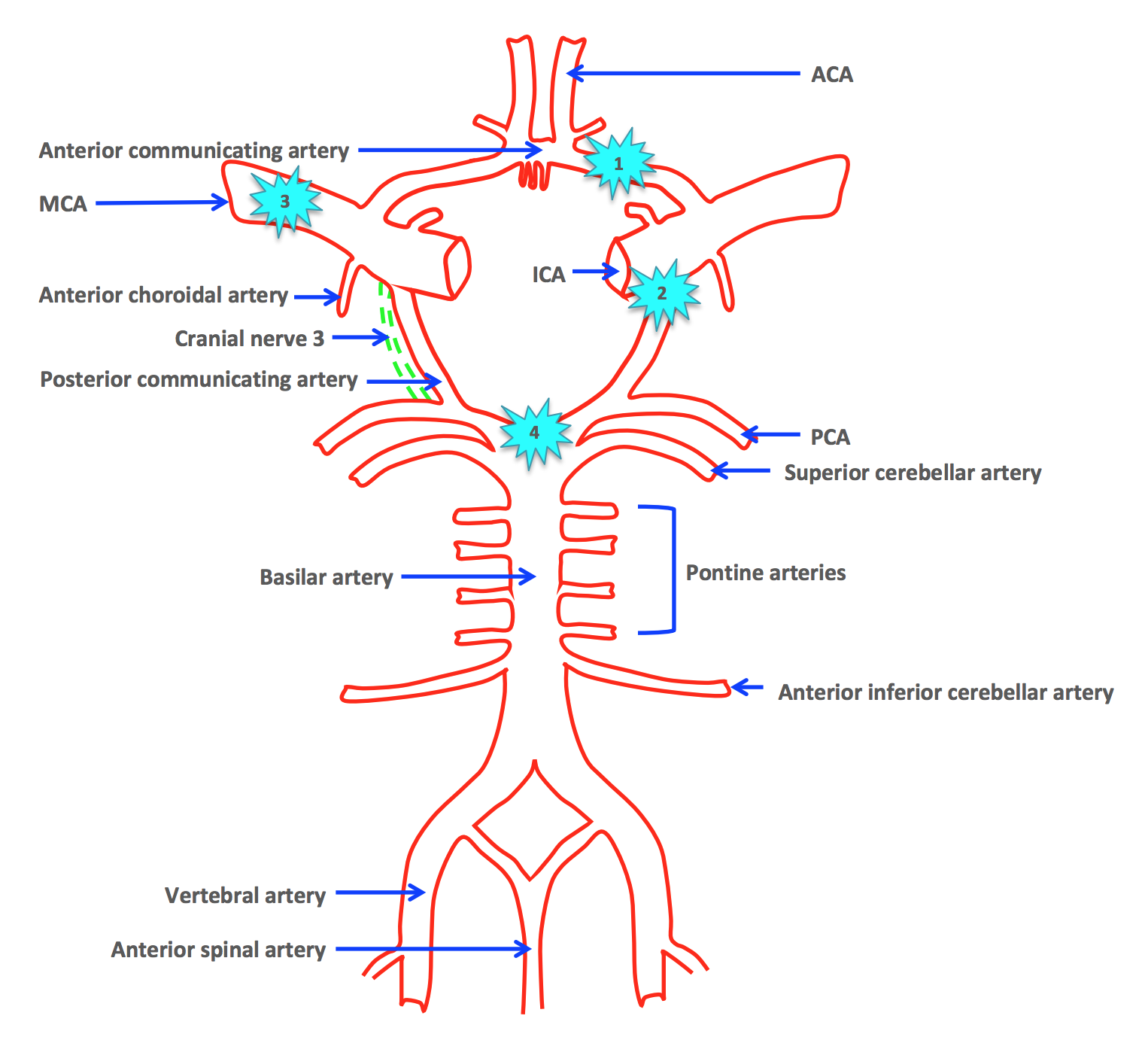 Arterial Supply of the Brain | Circle of Willis | Geeky Medics