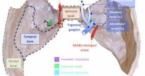 Middle Cranial Fossa Foramina