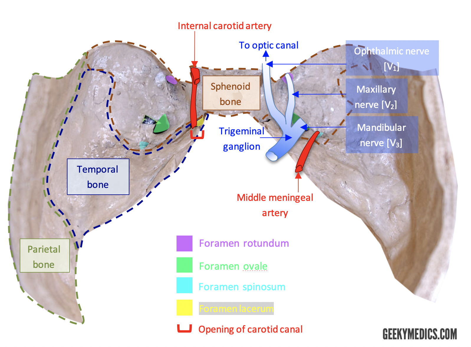 Cranial Foramina Skull Anatomy Foramen Geeky Medics