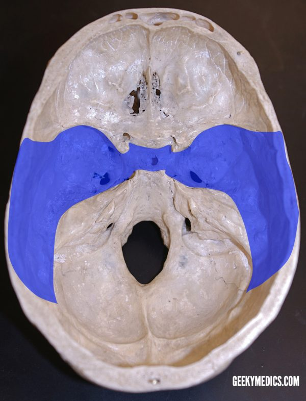 Middle Cranial Fossa