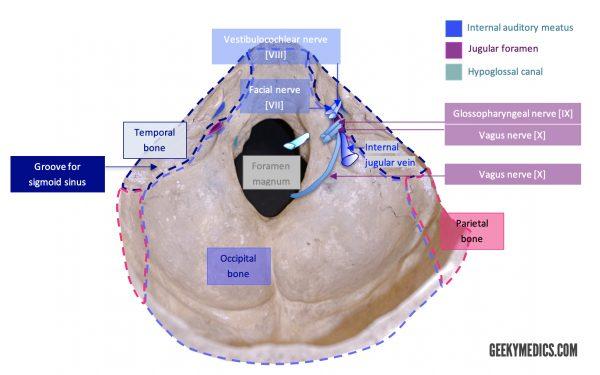 Posterior Cranial Fossa Foramina