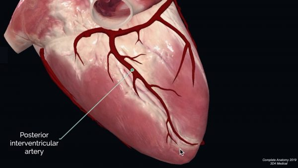 Posterior interventricular artery