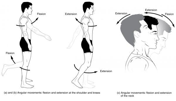 Flexion and Extension Movements