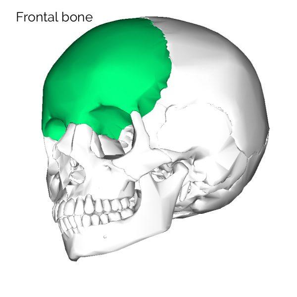 Frontal skull bone