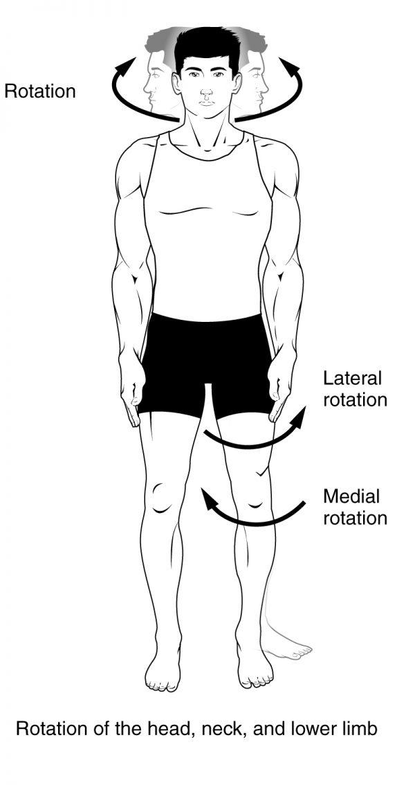 Internal rotation (Medial Rotation) and External rotation (Lateral Rotation)