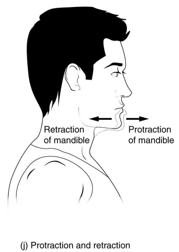 Protraction and Retraction Movements of the Jaw