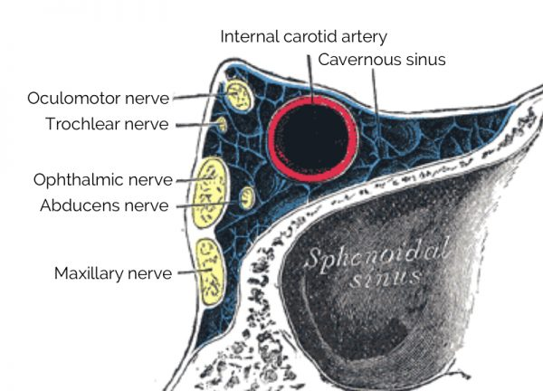 Cavernous sinus anatomy diagram