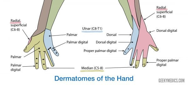 Dermatomes of the hand