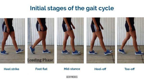 Gait cycle