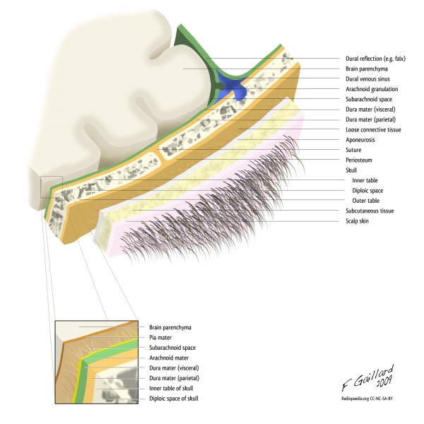 Layers of the scalp, inlcuding dura, arachnoid and pia mater
