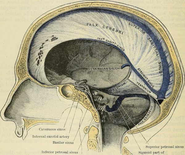 Intracranial compartments formed by dural reflections
