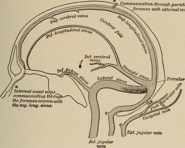 Anatomy of the dural venous sinuses