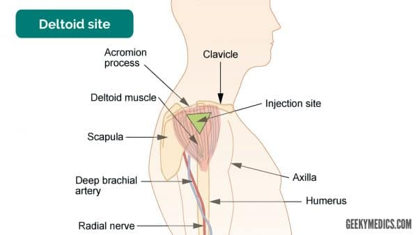 Deltoid intramuscular injection site