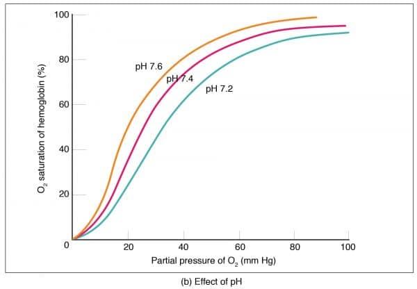 Oxygen dissociation curve pH