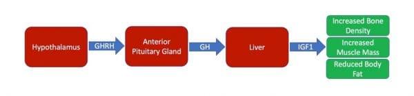 GH physiology