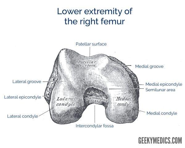 Right femur