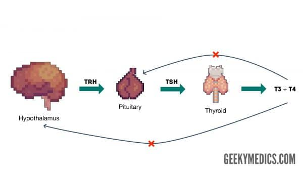 Figure 1. The hypothalamic-pituitary-thyroid (HPT) axis