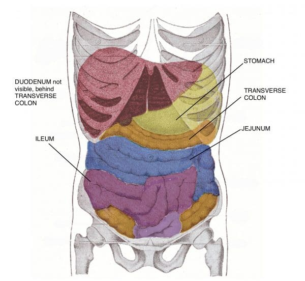 Overview of the small intestine