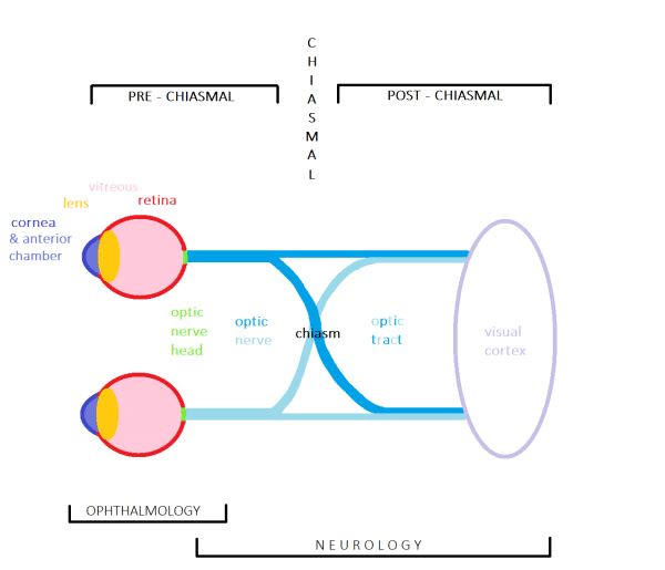 Diagram illustrating the visual system and anatomically important structures.