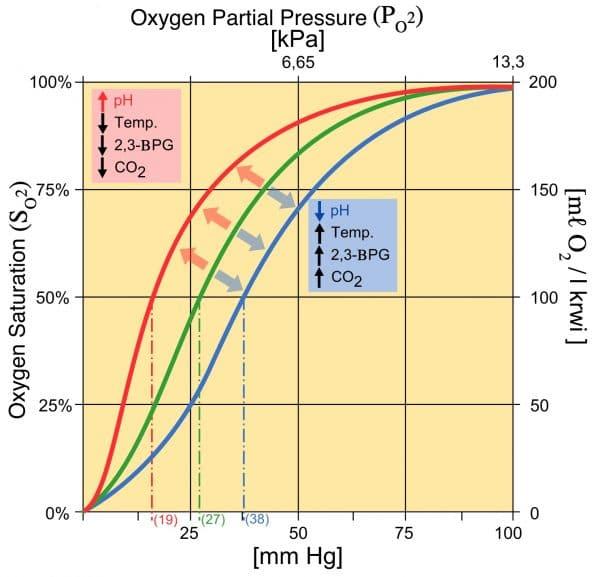 Haemaglobin oxygen saturation curve