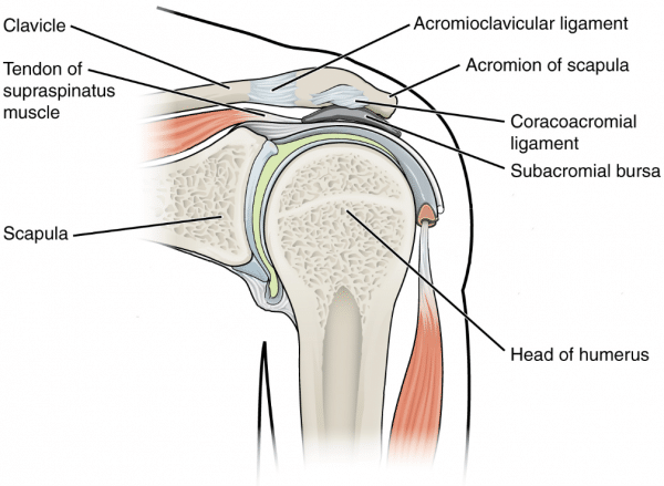 Anatomy of the subacromial space relevant to subacromial impingement syndrome