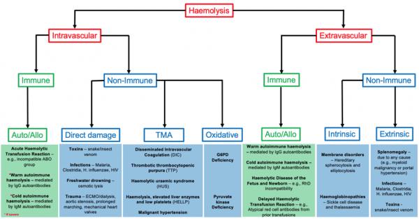 Causes of haemolytic anaemia
